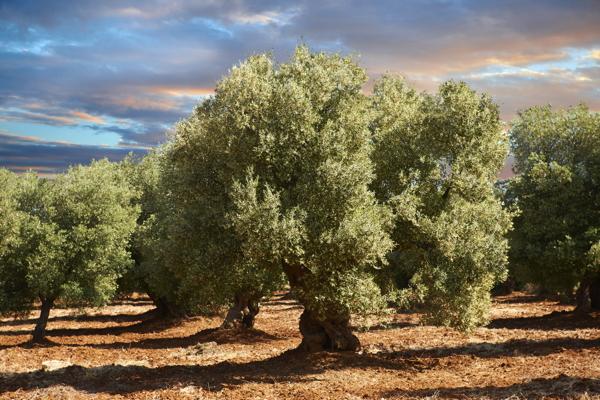 Immagine che contiene esterni, pianta, albero, erba  Descrizione generata automaticamente